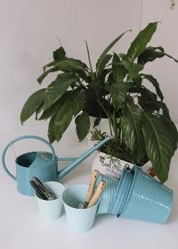 Подарок цветоводу «Комнатные цветы» Burgon & Ball от Consta Garden фото
