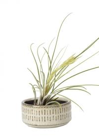 Керамическое кашпо для воздушных растений San Francisco Burgon & Ball фото