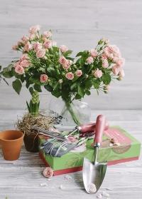 Набор садовых инструментов в красивой подарочной коробке Rosa Chinensis Collection от Burgon & Ball фото