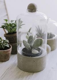 Стеклянный террариум для цветов на керамическом поддоне AGG44 Esschert Design фото