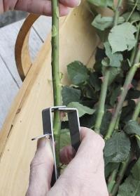 Очиститель стеблей для флористов Burgon & Ball фото.jpg