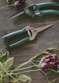Ножницы флористические для цветов Burgon & Ball фото.jpg