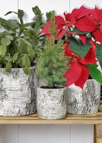 Кашпо для цветов из бетона березовая кора Burgon & Ball фото