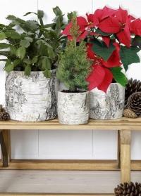 Кашпо для цветов и композиций из декоративного бетона с имитацией древесной коры Burgon & Ball фото