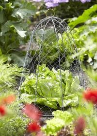 Колпак из металлической сетки для защиты растений ZB19 Esschert Design фото.jpg