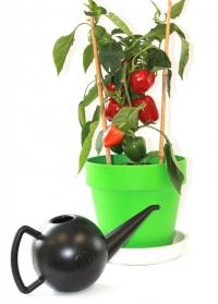 стильная дизайнерская лейка для комнатных растений Bowli Xala фото.jpg
