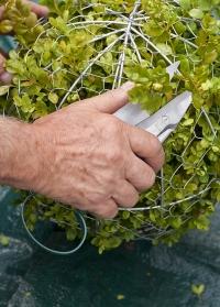 Английские ножницы для топиариев - стрижки растений Burgon & Ball фото.jpg