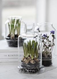 Стеклянные флорариумы в скандинавском стиле Leola Green House от Lene Bjerre фото.jpg