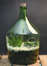 Флорариум для растений большой 15 литров AGG67 Esschert Design фото.jpg