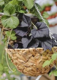 Кашпо подвесное для цветов из искусственного ротанга 7 литров Deco Smart Garden фото