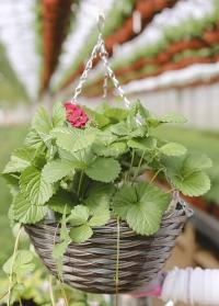 Кашпо для цветов подвесное из искусственного ротанга Pinto Smart Garden фото