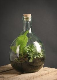 Террариум для растений бутыль 5 л. Esschert Design AGG47 фото