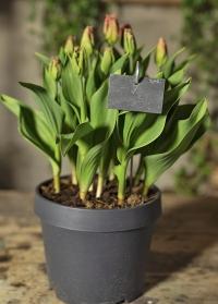 Садовые таблички для растений подвесные из сланца GT169 Esschert Design фото