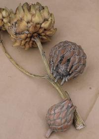 Декор интерьерный терракотовый Артишок Serafina Flower от Lene Bjerre фото