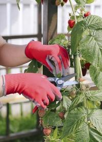 Флористические перчатки Blackfox для подарка флористу заказать в интернет-магазине Consta Garden фото