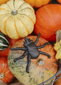 Декоративная фигурка паука из чугуна TT174 Esschert Design фото