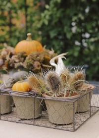Набор цветочных горшков из 6 шт. в металлической корзинке AT13 Esschert Design фото
