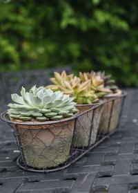 Набор терракотовых горшков для цветов в металлической корзинке AT11 Esschert Design фото