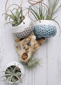 Керамические подвесные кашпо для суккулентов и кактусов Baby Dotty Trio Burgon Ball фото