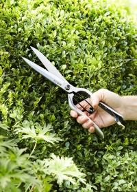 Ножницы для фигурной стрижки кустов Sophie Conran Burgon & Ball фото