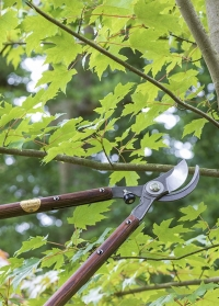 Сучкорез садовый для обрезки National Trust Burgon & Ball фото
