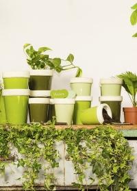 Садовые таблички для названий растений Green Shades EL065 от Esschert Design фото
