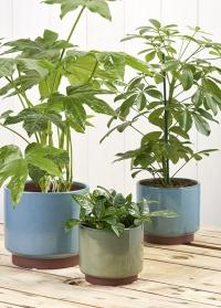 Керамические кашпо для комнатных растений в стиле бохо Malibu Blue Indoor pots Collection Burgon & Ball фото