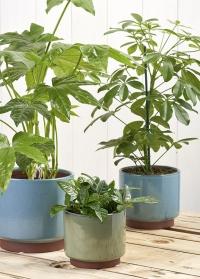 Керамические кашпо для комнатных растений Malibu Green в бохо стиле Burgon & Ball фото