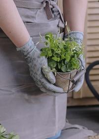 Перчатки садовые с покрытием из латекса Eglantine Grey AJS-Blackfox фото