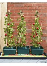 Специальные контейнеры для выращивания томатов - набор 3 шт. Tomato Gro-Box от Smart Garden фото