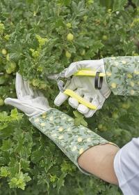 Перчатки c длинными манжетами для роз и колючих растений Sicilian Lemon Garden Briers фото
