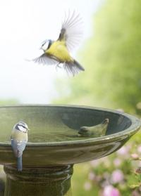 Керамическая купальня для птиц на подставке Green FB424 Esschert Design фото