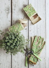 Подарок садоводу и дачнику Honeysuckle by William Morris Briers