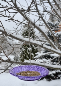Стеклянная кормушка для птиц для дачи и сада FB331 Violet Esschert Design фото