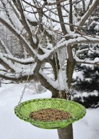 Кормушка для птиц стеклянная тарелка FB331 Green Esschert Design фото