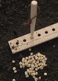 Линейка для посадки семян 30 см Essential Tools Burgon & Ball фото.jpg