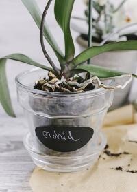 Кашпо стеклянное для орхидей Esschert Design