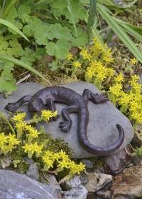 Садовая фигурка Ящерица для декора приусадебного участка Esschert Design TT158 фото