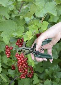 Мини-ножницы садовые Burgon & Ball фото.jpg