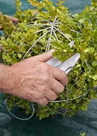 Садовые ножницы для топиарной стрижки Topiary Trimmming  Burgon and Ball фото.jpg