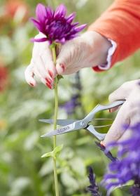 Ножницы флористические для цветов Sophie Conran Burgon and Ball картинка.jpg