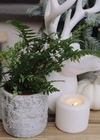 Кашпо для цветов из декоративного бетона с имитацией березовой коры заказать фото