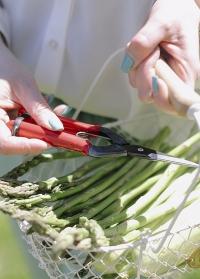 Ножницы японские для цветов, овощей и фруктов T-550 Chikamasa фото.jpg