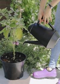 Дизайнерская лейка кофейник для полива цветов Xala фото
