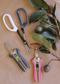 Инструменты для орхидей и комнатных растений Burgon & Ball фото