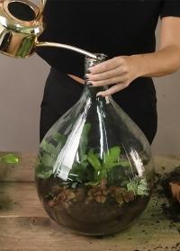 Стеклянная бутыль для цветочного террариума AGG49 Esschert Design фото