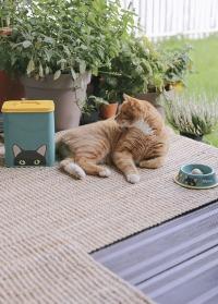 Миска металлическая эмалированная для кошек Doris Cat Bowl Creaturewares Burgon Ball фото