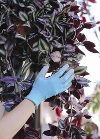 Флористические перчатки с нитрилом Blue Lagoon Colors Blackfox фото