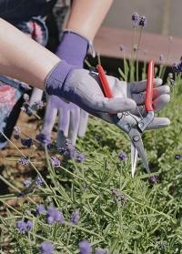 Перчатки флористические тонкие для цветов Violet Colors AJS-Blackfox фото