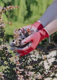 Перчатки тонкие с нитрилом для сада огорода Colors AJS Blackfox фото.jpg